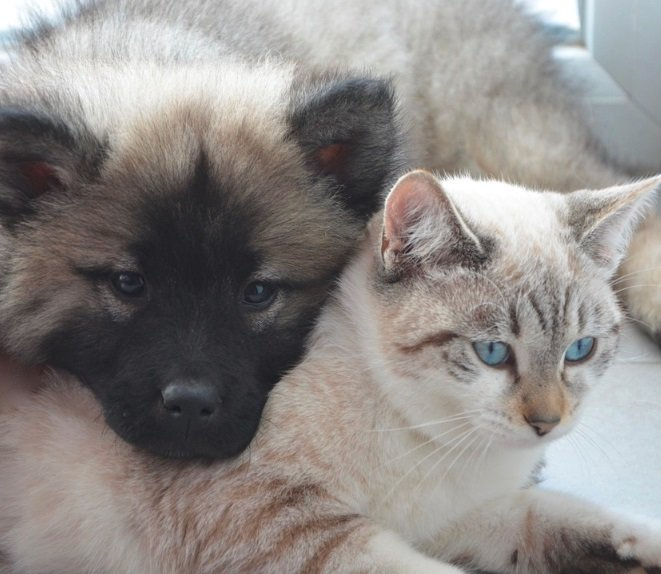Puppy%20and%20kitty