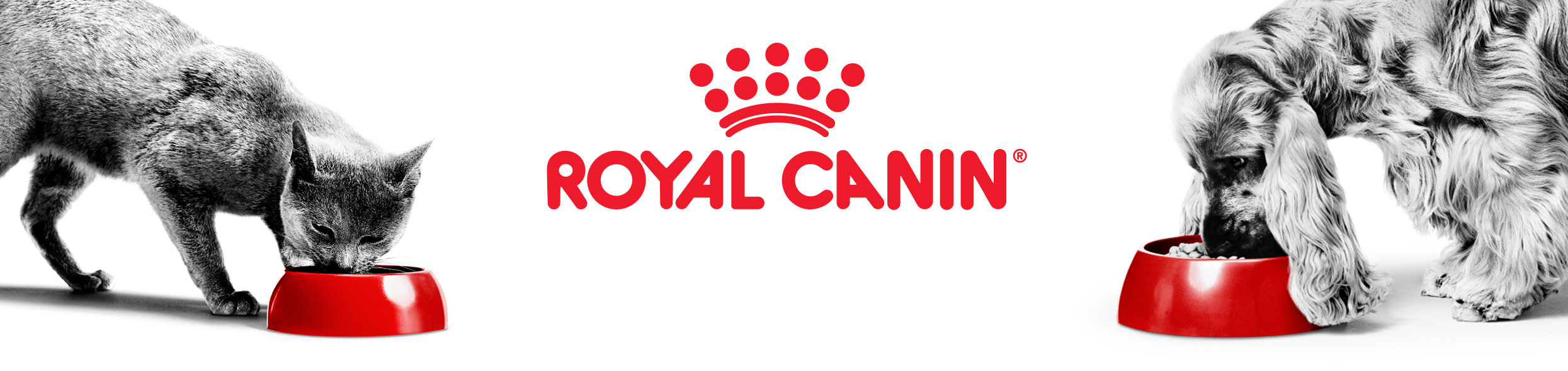 Royal Canin Main Banner