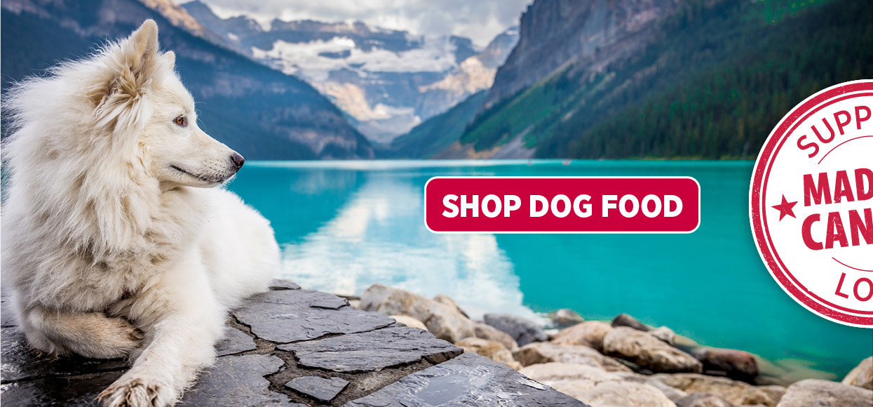 Nutrience Shop Dog Banner