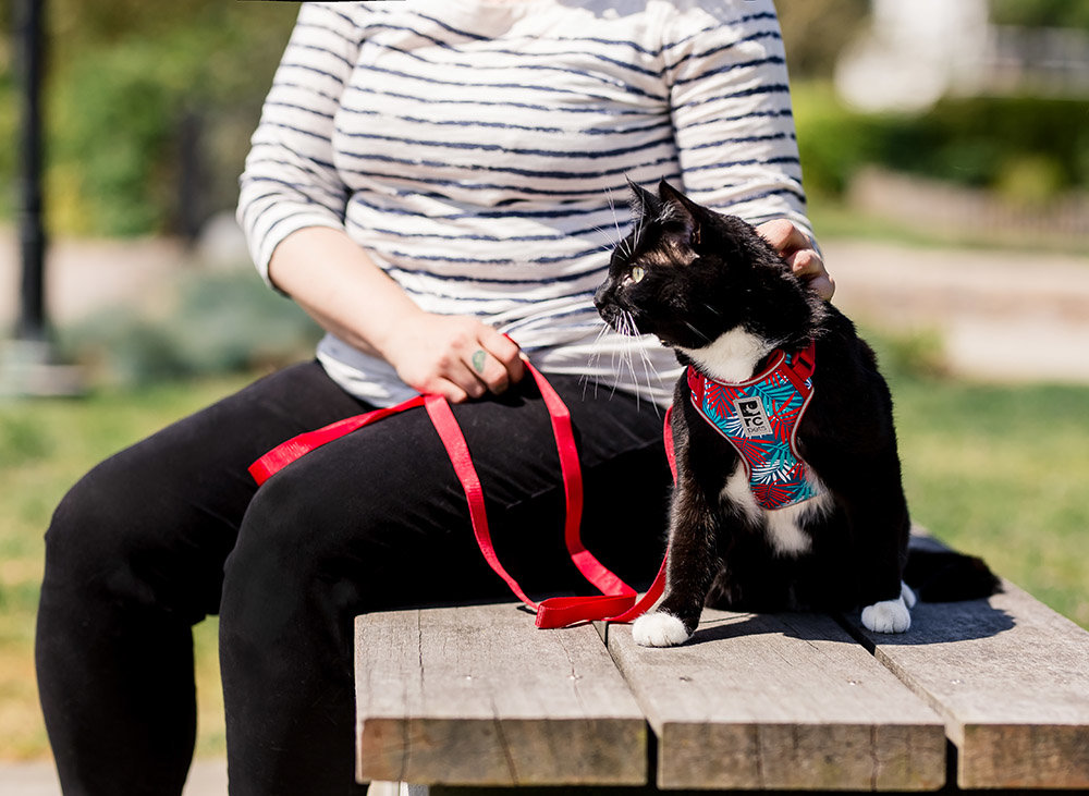 Woman petting her cat on a park bench