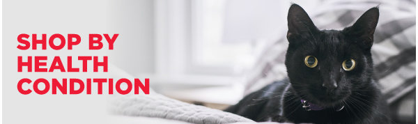 Cat Health Conditions
