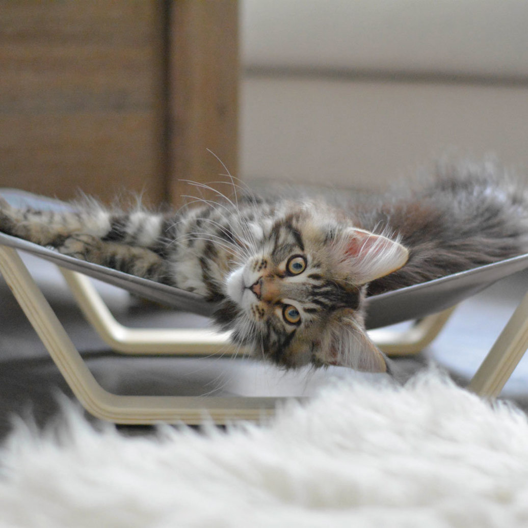 View larger image of Cat Hammock