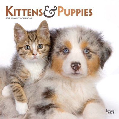 """Browntrout, Calendar, 2019 Kittens & Puppies - 12x12"""""""