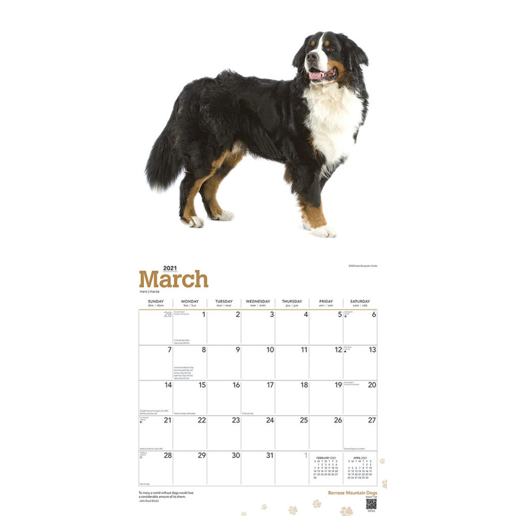 View larger image of Calendar, 2021 Bernese Mountain Dogs - 12x12""