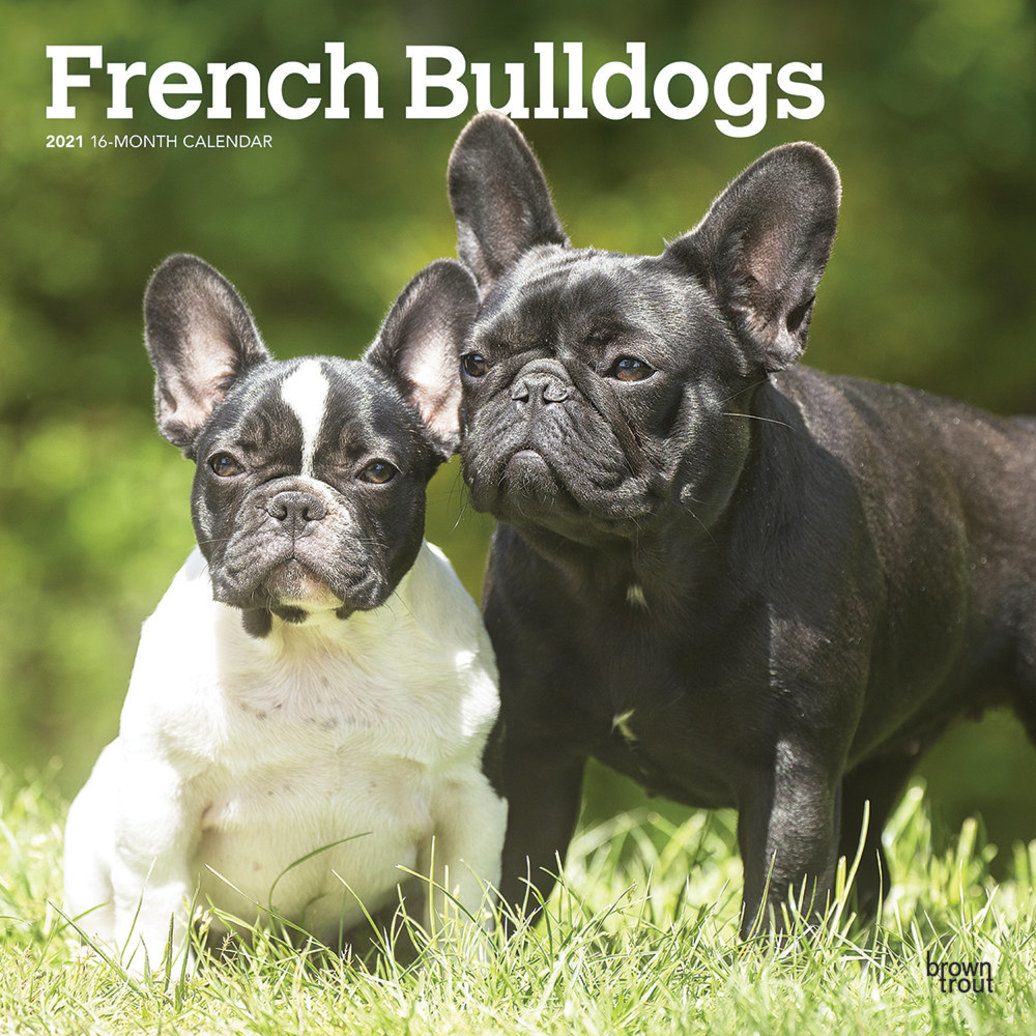 """View larger image of Calendar, 2021 French Bulldogs - 12x12"""""""