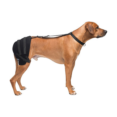 Pet Therapy - Hip Wrap w/ Therapy Gel