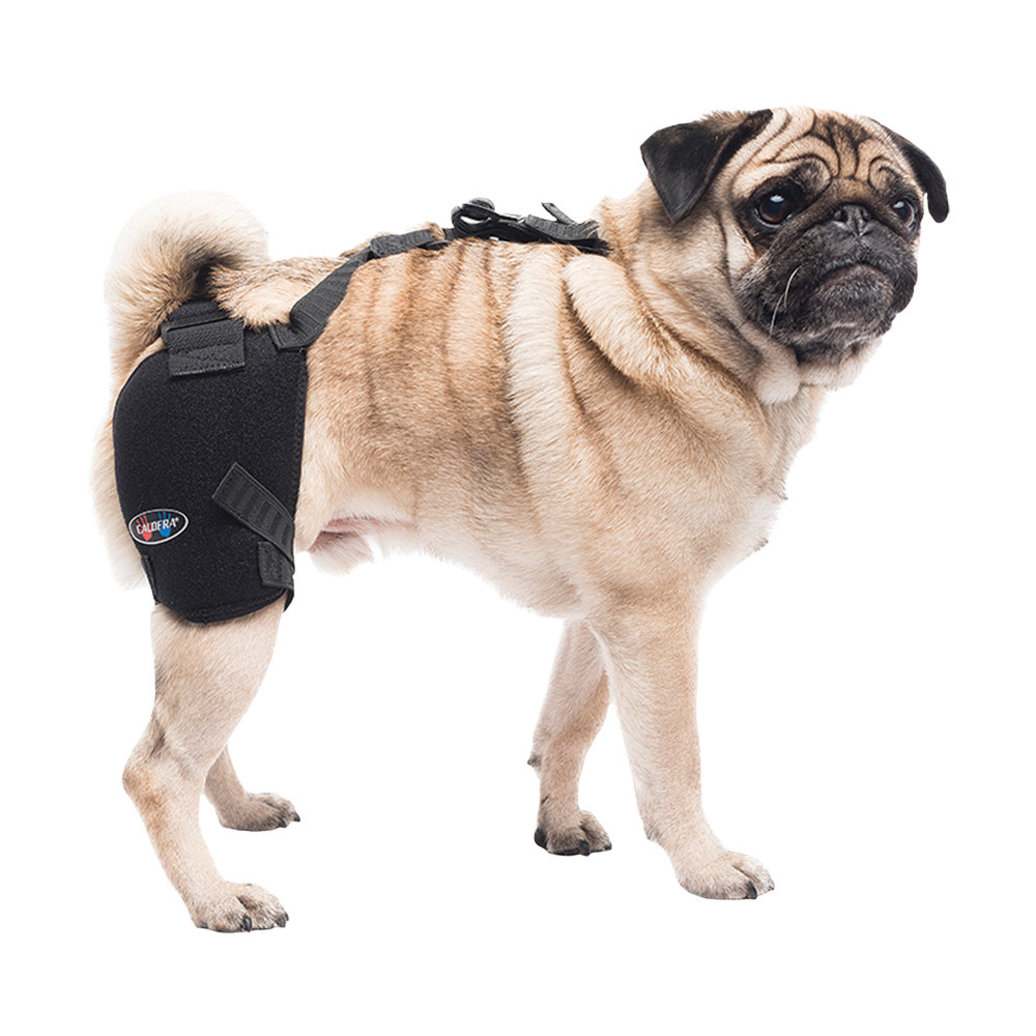 View larger image of Pet Therapy - Hip Wrap w/ Therapy Gel