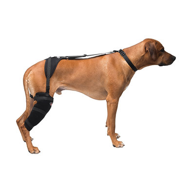 Pet Therapy - Stifle Wrap with Therapy Gel - Large