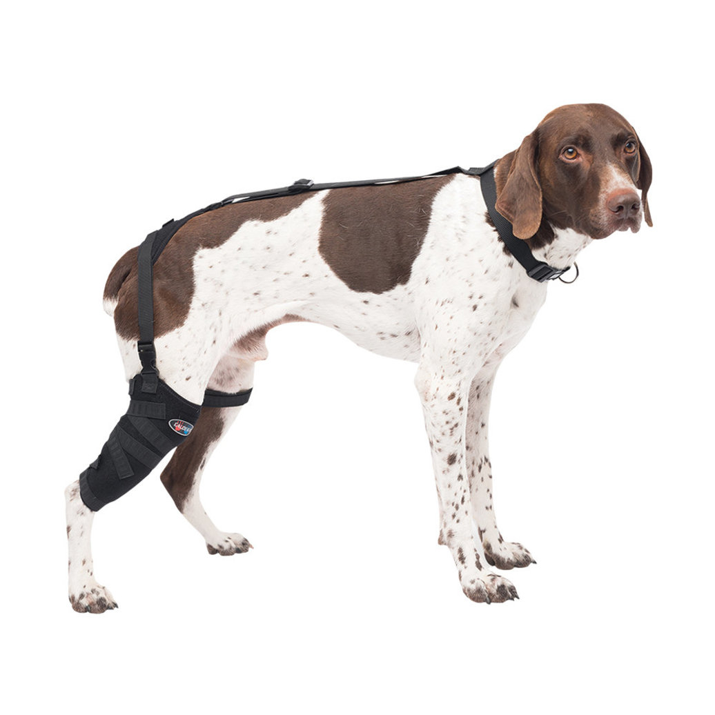 View larger image of Pet Therapy - Tall Stifle Wrap with Therapy Gel - Medium