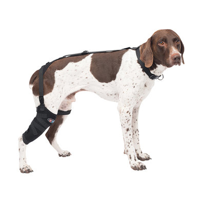 Pet Therapy - Tall Stifle Wrap with Therapy Gel - Medium