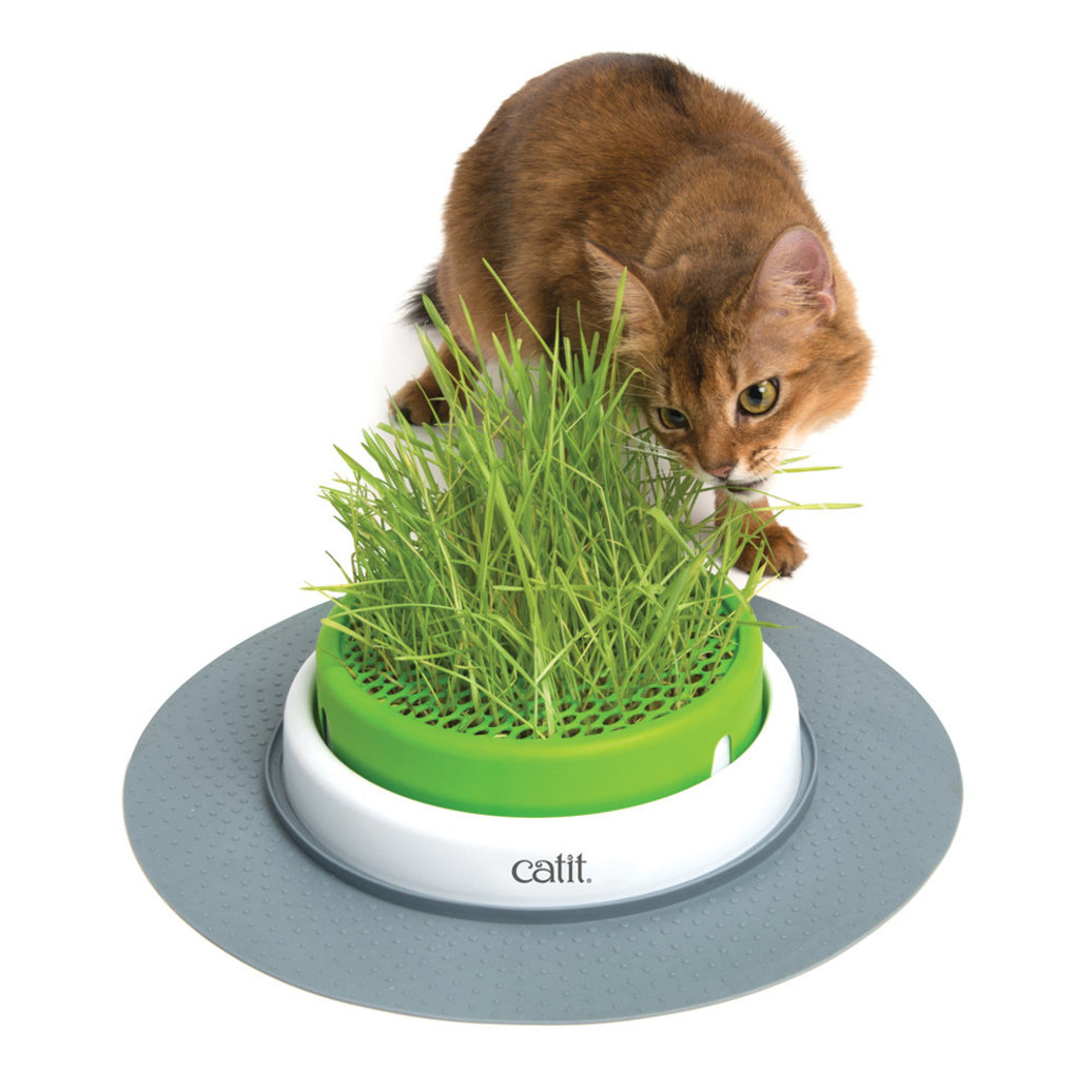 View larger image of Catit 2.0 , Senses Grass Planter