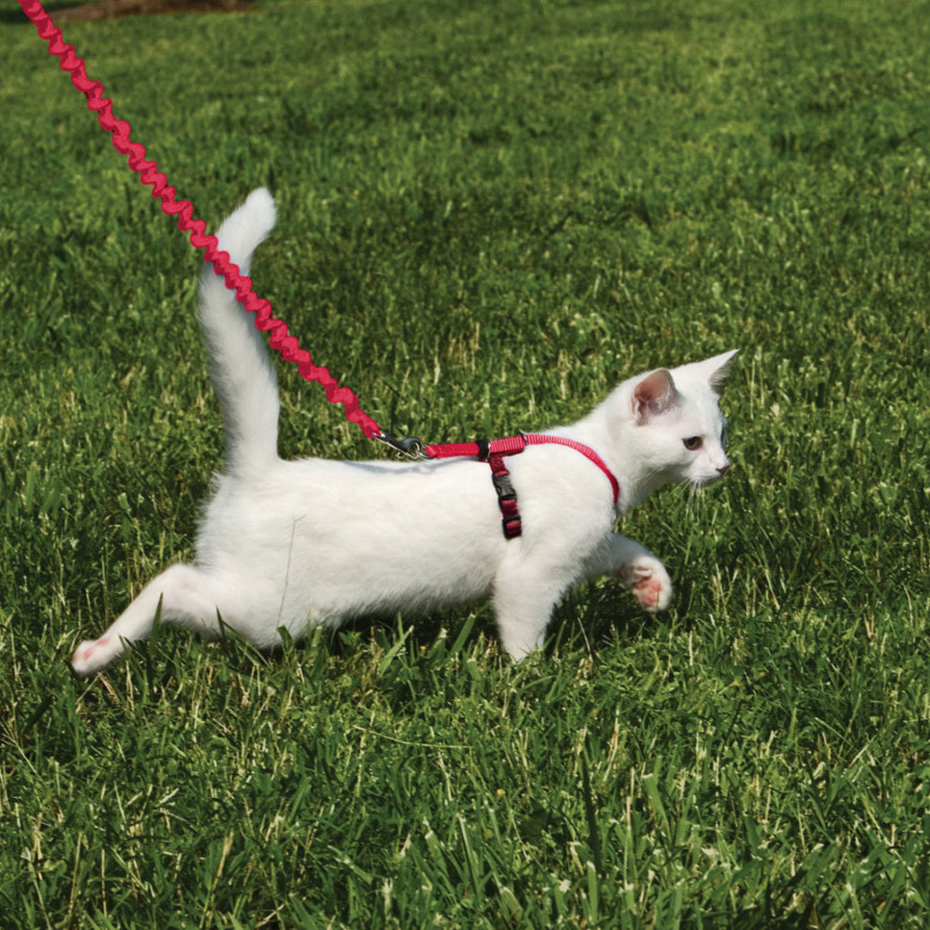 View larger image of Come With Me Kitty Cat Harness & Bungee Leash - Red