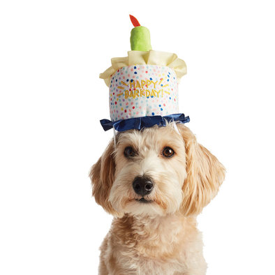 Birthday Hat - Happy Barkday - Blue Light