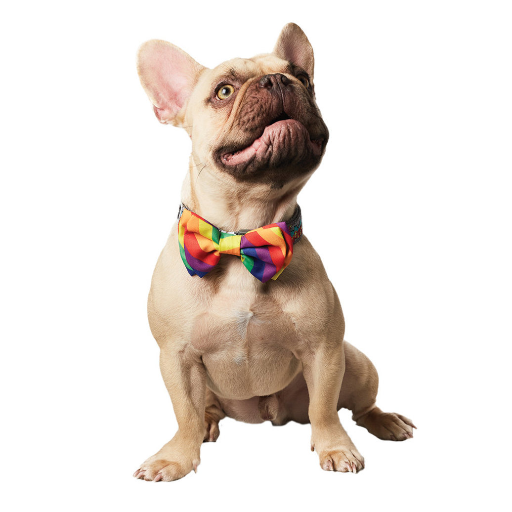 View larger image of Pride Bowtie - Rainbow