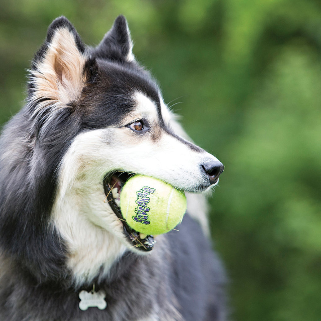 View larger image of Tennis Ball Squeaker - 2 Pk - Large
