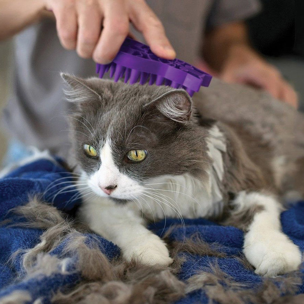 View larger image of Zoom Groom Cat