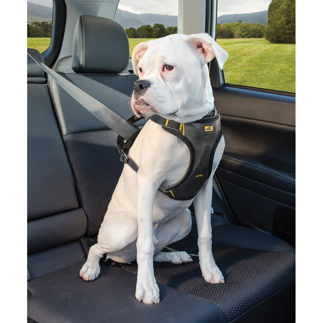 View larger image of Impact Seatbelt Harness for Dogs - Black