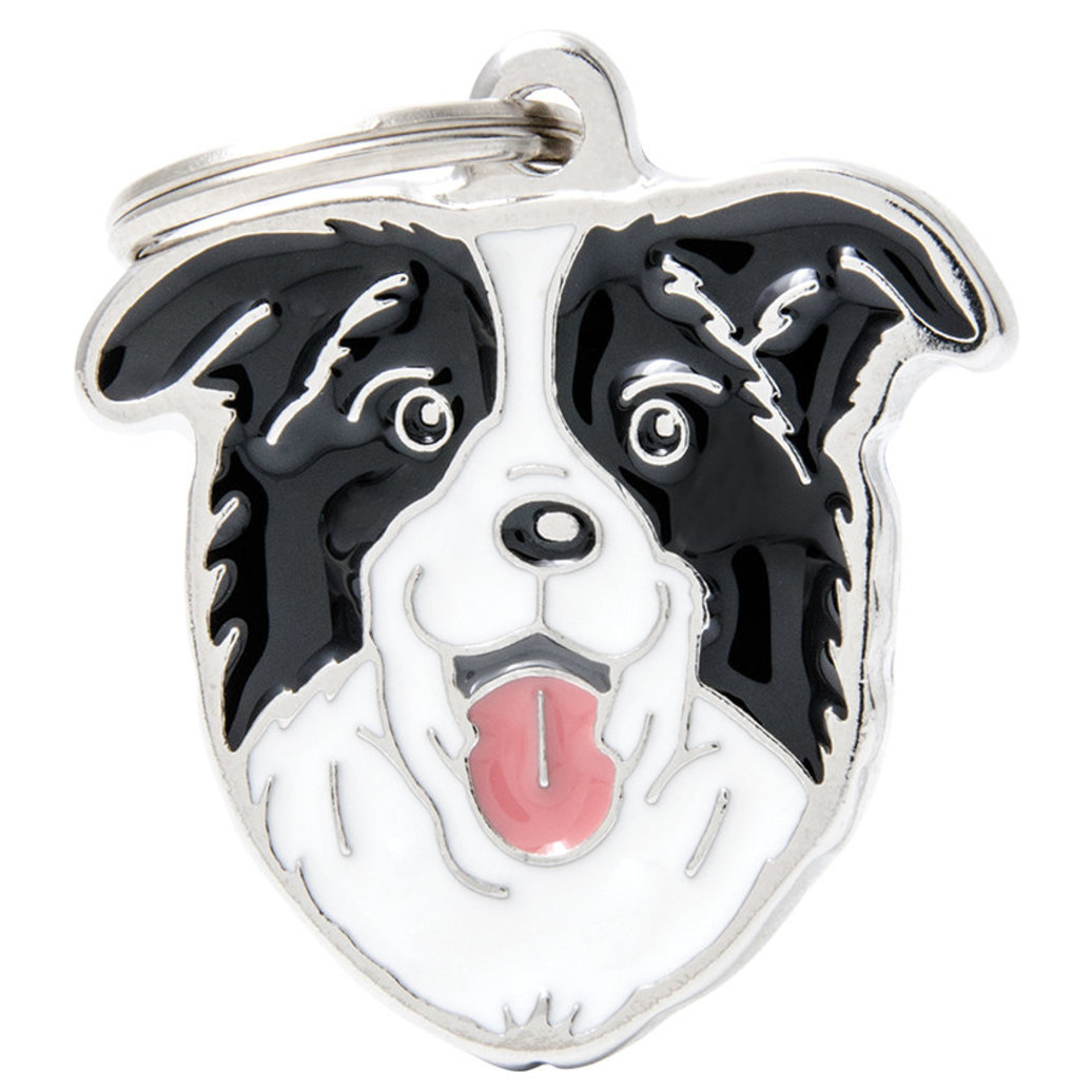View larger image of Border Collie