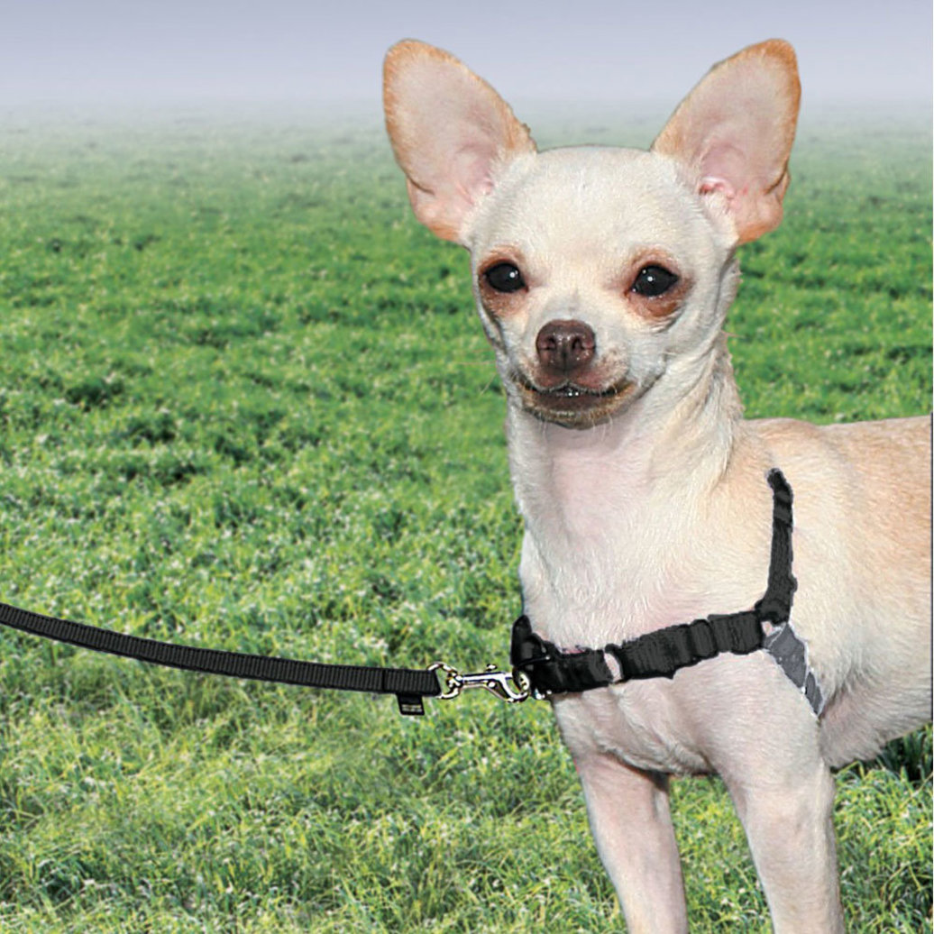 View larger image of Harness - Black