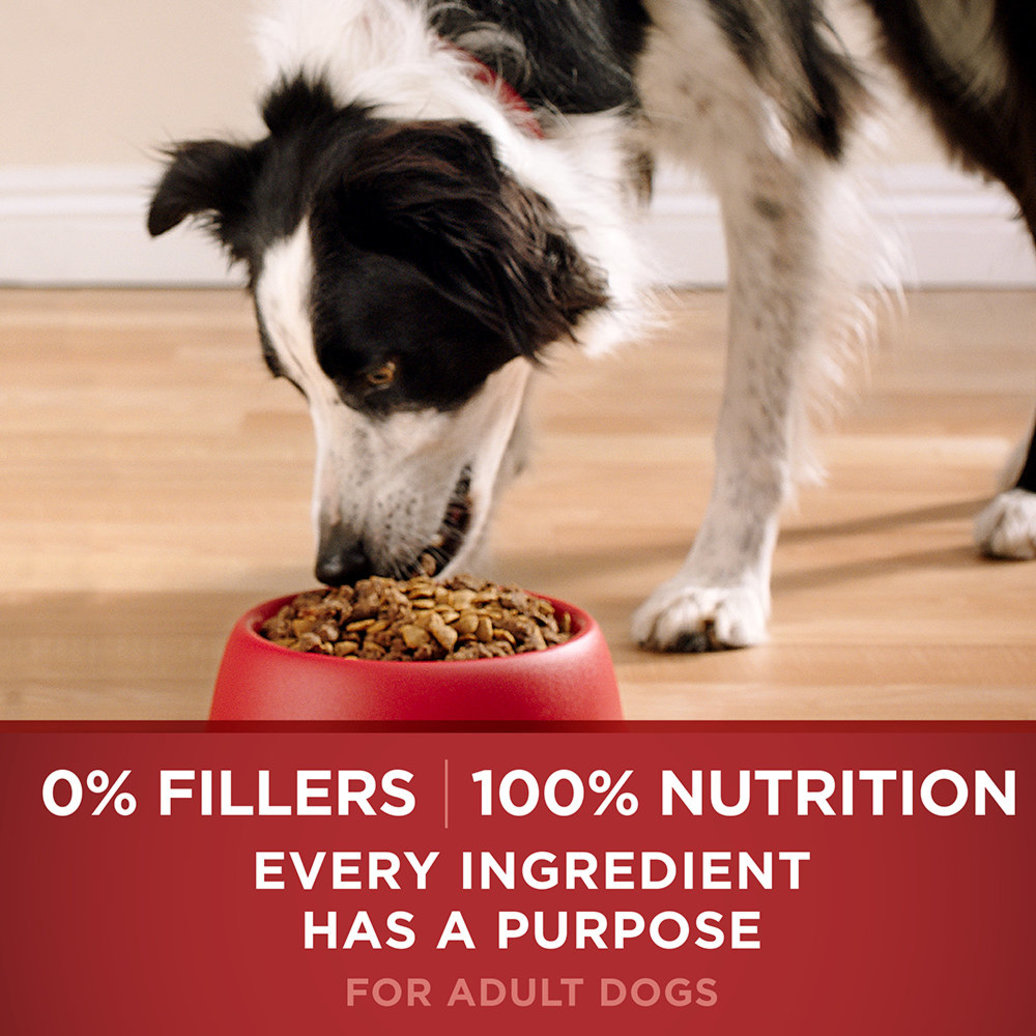 View larger image of Smartblend Natural Dry Dog Food, Chicken & Rice