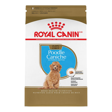 Breed Health Nutrition Poodle Puppy