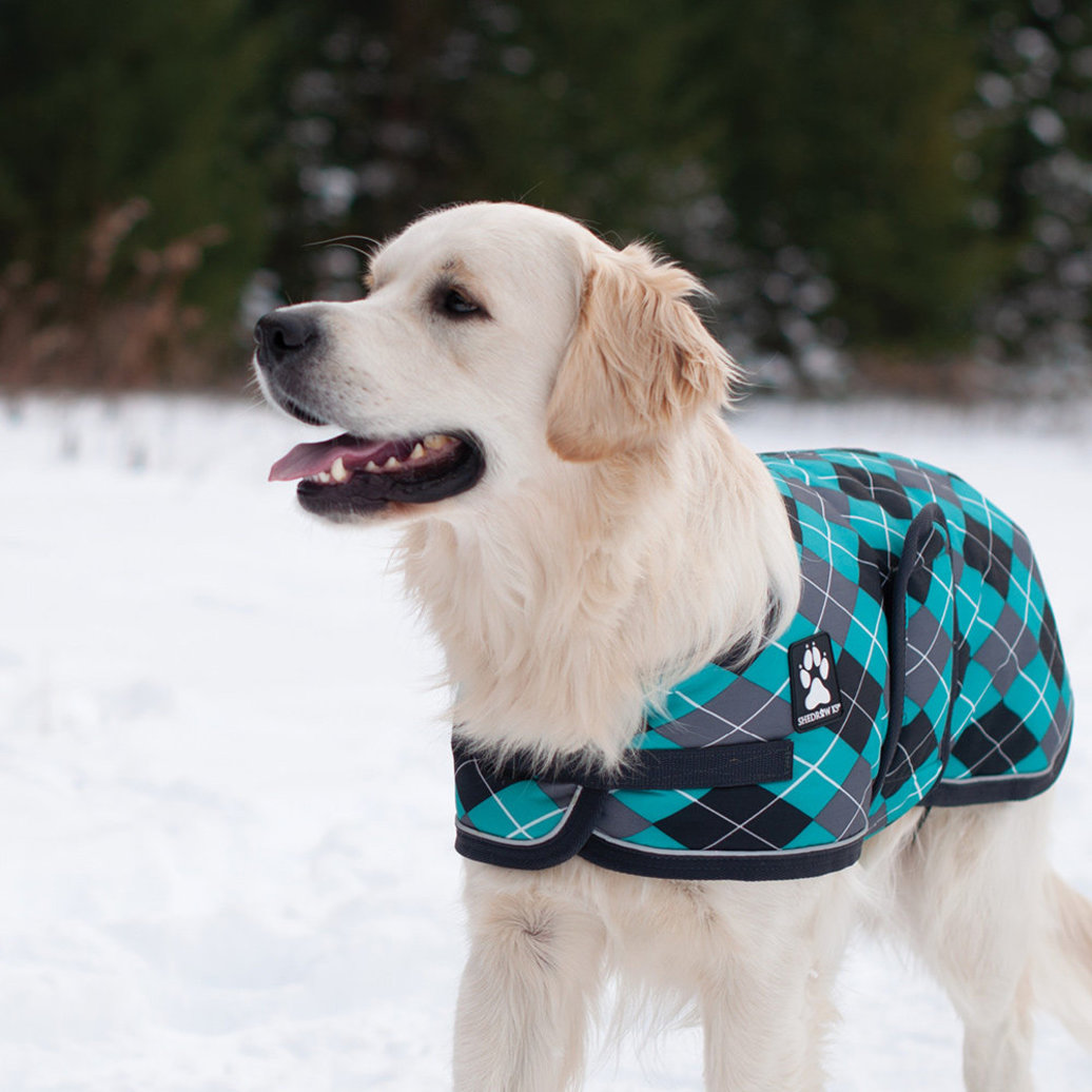 View larger image of K9 Glacier Dog Coat - Black/Teal Argyle